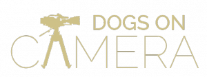 Dogs on Camera