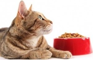 We make sure your cat is feed regularly