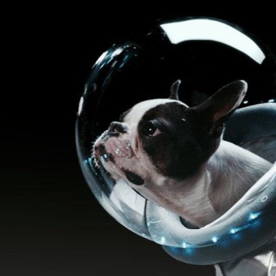 Frodo the Boston Terrier in Renault advert