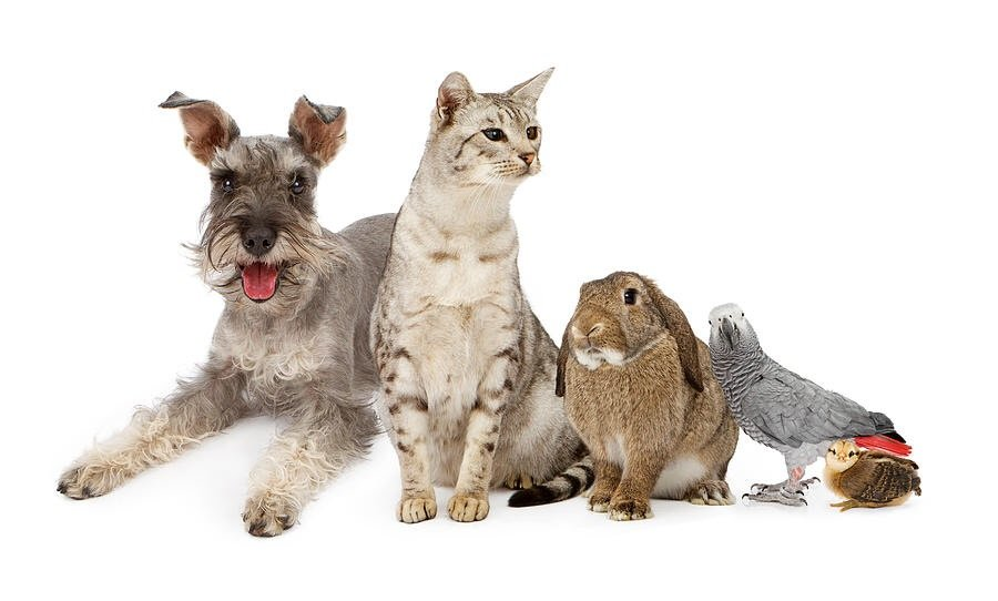 We also offer a house and pet sitting service