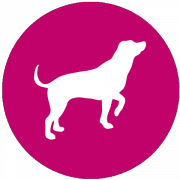Perfect Dog Film School Icon