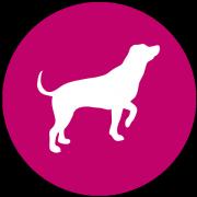 Perfect Dog Film School Icon