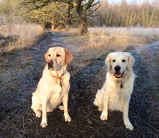 DX Lab and Radio Goldie a double sit stay at Wimbledon Common
