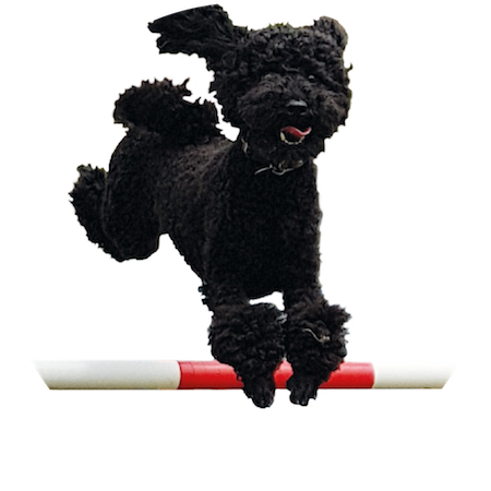 Fun Dog Agility Classes