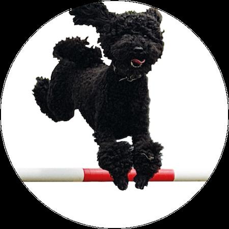 Fun Dog Agility Classes