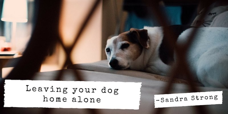 Leaving your dog home alone